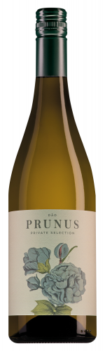 Prunus Dao Branco (2018)